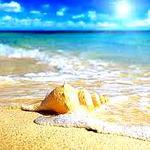 Аватар Ракушка лежит на песчаном берегу и морская волна набегает на берег