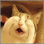 Аватар Кошка закрывает глаза лапками