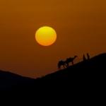 Аватар Погонщики с верблюдами на фоне заката, ву Rasmus Cederskjold