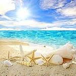 Аватар Морские звезды и ракушки, разложенные на берегу моря