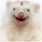 Аватар Очаровательный ежик улыбается