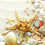 Аватар Морская звезда лежит на песке в окружении ракушек