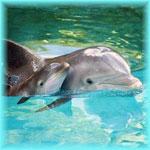Аватар Дельфины в воде