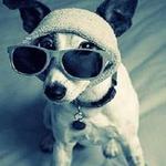 Аватар Собака в очках
