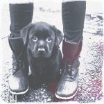 Аватар Маленький щенок сидит у ног хозяйки