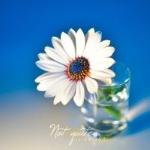 Аватар Ромашка в стакане с водой