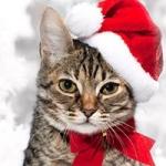 Аватар Полосатый кот в новогодней шапке