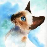 Аватар Красивый сиамский кот