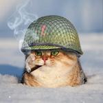 Аватар Рыжий кот в каске и с сигаретой в пасти