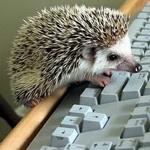 Аватар Милый ежик на клавиатуре