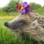 Аватар Ежик с цветком на иголках