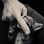 Аватар Маленький котенок кусает палец человеческой руки