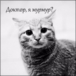 Аватар Кошка на белом фоне (Доктор, я мурмур?)