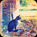 Аватар Кот сидит на крыльце дома, среди разноцветной опавшей листвы (Осень)