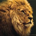 Аватар Морда льва на темном фоне
