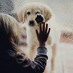 Аватар Девочка держит руку на окне, за которым собака под дождем положила лапу на стекло