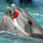 Аватар Дельфины с цветком