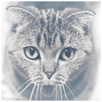 Аватар Полосатый кот удивлен