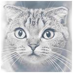 Аватар Полосатый кот очень удивлен
