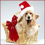 Аватар Пес в новогодней шапке сидит в корзинке