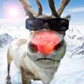 Аватар Олень в очках