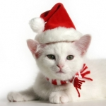 Аватар Белый котенок в новогодней шапке
