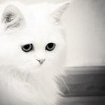 Аватар Взгляд грустного котика