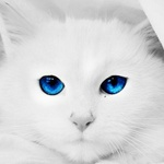 Аватар Кот с синими пронизывающими глазами