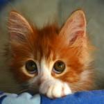 Аватар Грустный рыжий котенок
