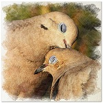 Аватар Влюбленные голуби прижались друг к дружке