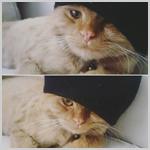 Аватар Серии фото с котом в шапке