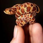 Аватар В руке маленькая змея