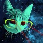 Аватар Кот в очках