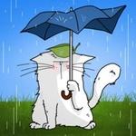 Аватар Кот с листиком на голове прячется под зонтом от дождя, by Pattes De Velours