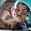 Аватар Толстый котяра ловит капли из-под крана