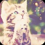 Аватар Полосатый котенок среди бликов-боке