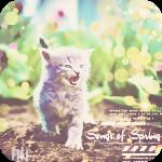 Аватар Маленький котенок идет по земле на фоне зеленой травы (Songs of spring / Песни весны)