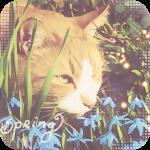Аватар Рыжий кот принюхивается к голубым подснежникам-пролескам