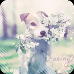 Аватар Собака держит в зубах ветку цветущей яблони