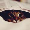 Аватар Кот спрятался под газету и выглядывает из-под нее