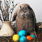 Аватар Кролик сидит рядом с пасхальными яйцами и букетом вербы