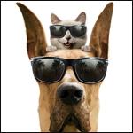Аватар Собака и кот в солнцезащитных очках