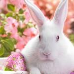 Аватар Белый кролик и пасхальное яйцо на фоне цветов