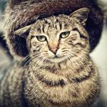 Аватар Грустный полосатый кот в шапке