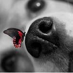 Аватар Нос собаки, на котором сидит бабочка