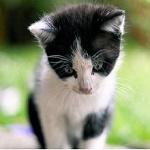 Аватар Грустный котенок опустил голову