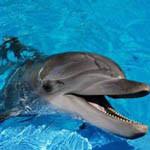 Аватар Дельфин выглядывает из воды