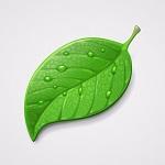 Аватар Зеленый лист с каплями воды