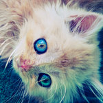 Аватар Милый котенок с красивыми глазками