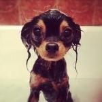 Аватар Мокрый щенок на фоне плитки